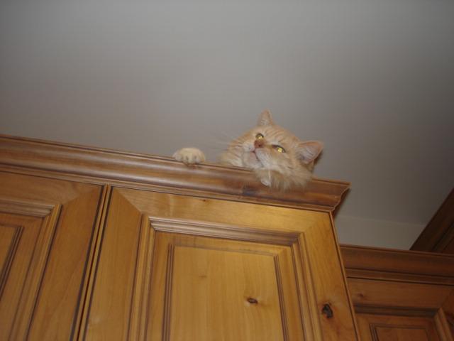 Obie on Cabinet001.JPG