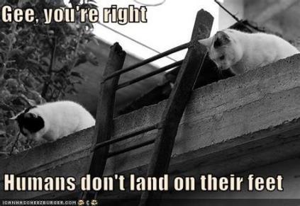 catswatchhumansfall.jpg