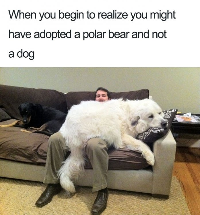 cute-wholesome-dog-puppie-memes-7-590717ea16893__700.jpg