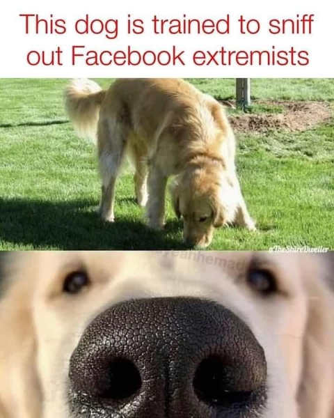 dog-nose-trained-to-sniff-facebook-extremists.jpg