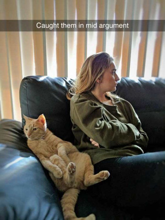 funny-snapchats-cat-woman-arguement.jpg