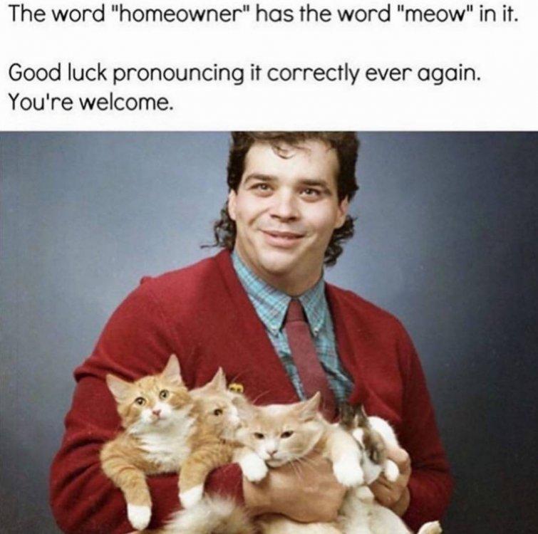 homemeowcats.jpg