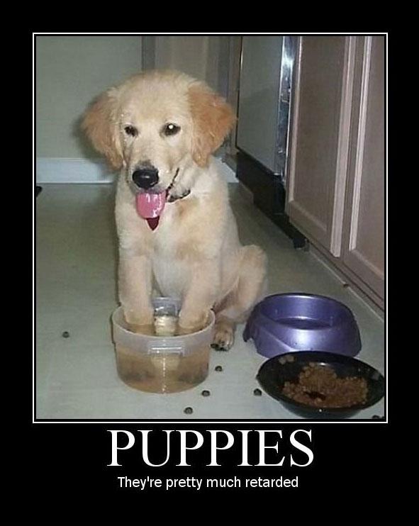 puppy-meme.jpg
