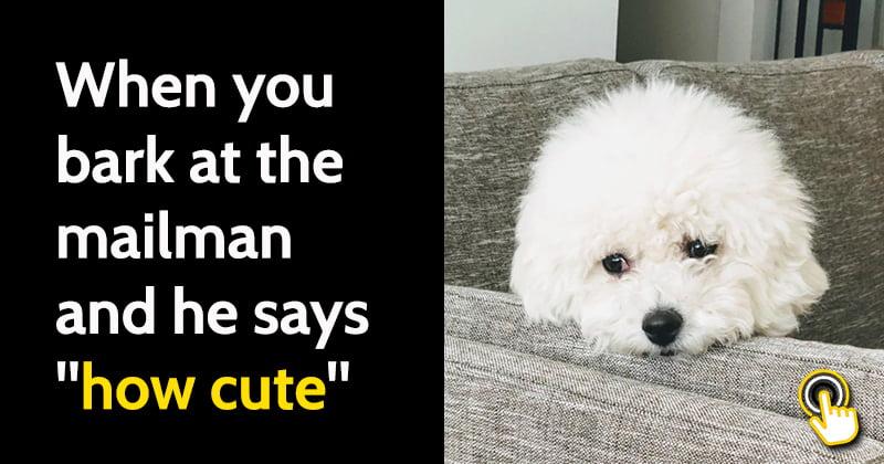 share-funny-dog-memes-may-5.jpg