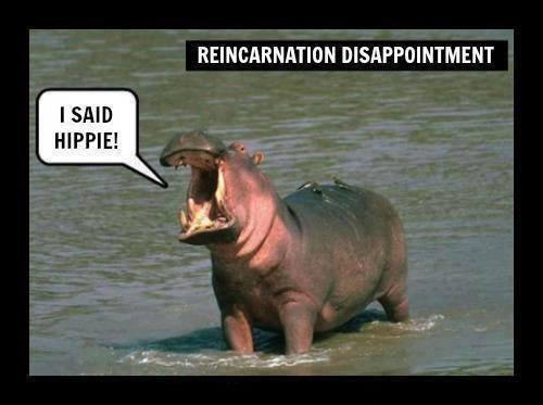reincarnation disappointment.jpg