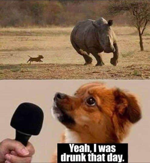 dog-chasing-rhino-drunk-that-day.jpg