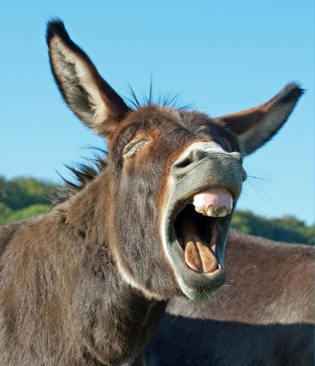 laughing-donkeys7.jpg