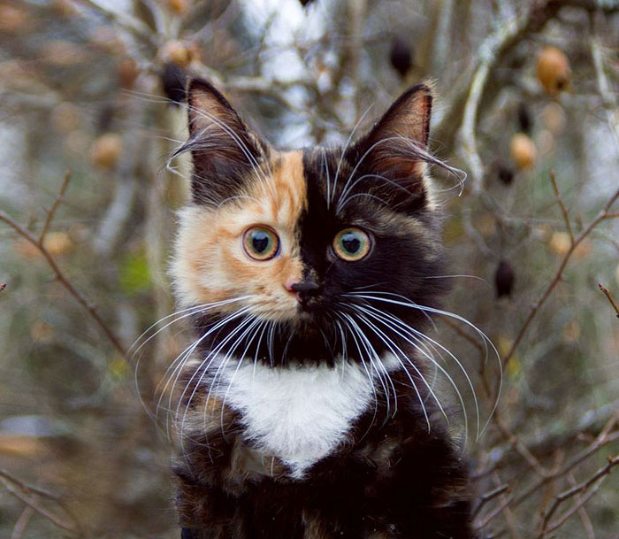 two-colour-faced-cat.jpg