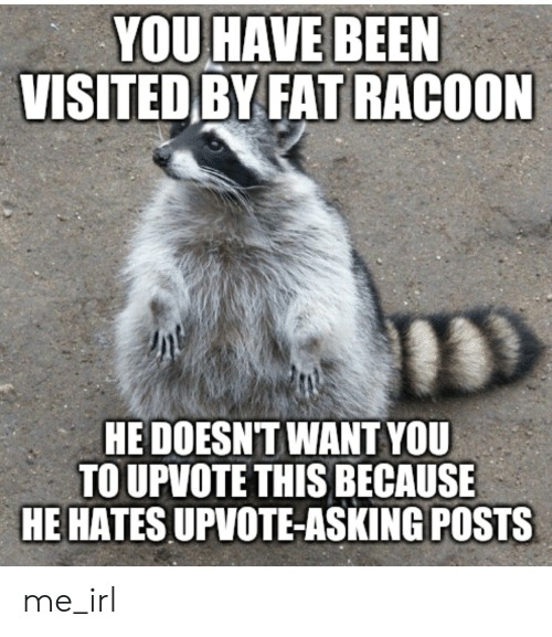 you-have-been-visited-by-fat-racoon-hedoesnt-want-you-60156543.png.c04bc08ecc16b9ad6db29c6f56f701fd.png